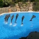 Tenerife en Islas Canarias – Visita al Loro Parque y acuario (video)