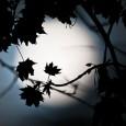 Arranca la primavera en España que tendrá dos eclipses, uno de sol y uno total de luna El eclipse de luna será el 15 de abril y será visible en […]