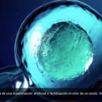 Hicieron crecer óvulos fuera del ovario hasta que estuvieron listos para la fertilización El avance podría ayudar a mujeres que se someten a tratamientos de quimioterapia RTVE.es/EFE Científicos británicos y […]